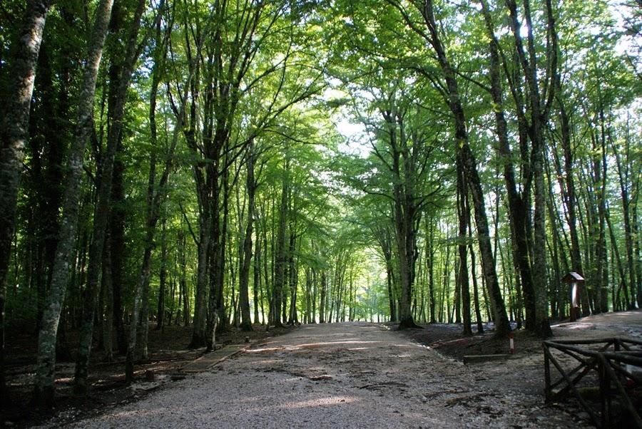 Sval søndagstur i Umbra Forest – Gargano