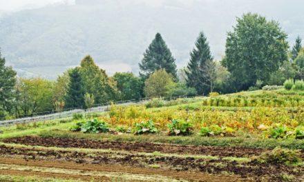 Velkommen til urtenes verden – Giardino delle Erbe hagen i Italia