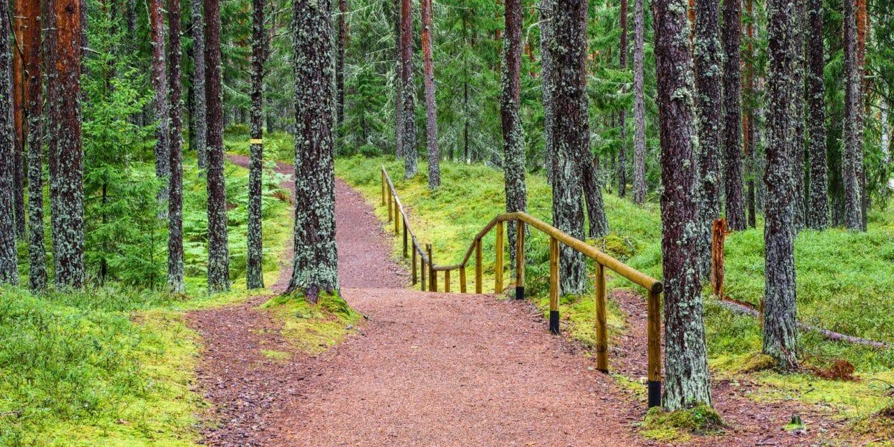 Stress ned i vakker Estisk natur