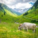 På fottur i Montafon i Østerrike