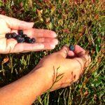Norske naturopplevelser på egen rødliste