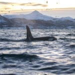 Searching for Whales and the Northern Lights with Arctic Expedition