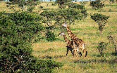 Reis med Afrikaspesialisten The Grown Up Travel Company