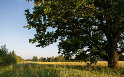 Gauja nasjonalpark i Latvia – en møteplass mellom natur, kultur og historie
