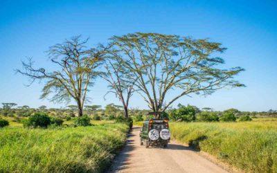 Safari i Serengeti nasjonalpark – vilt og vakkert