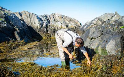 Den ville smaken av Norge – spennende nyttevekster i sjø og på land