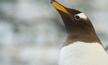 Akvariet i Bergen – ekte dyr og ekte opplevelser