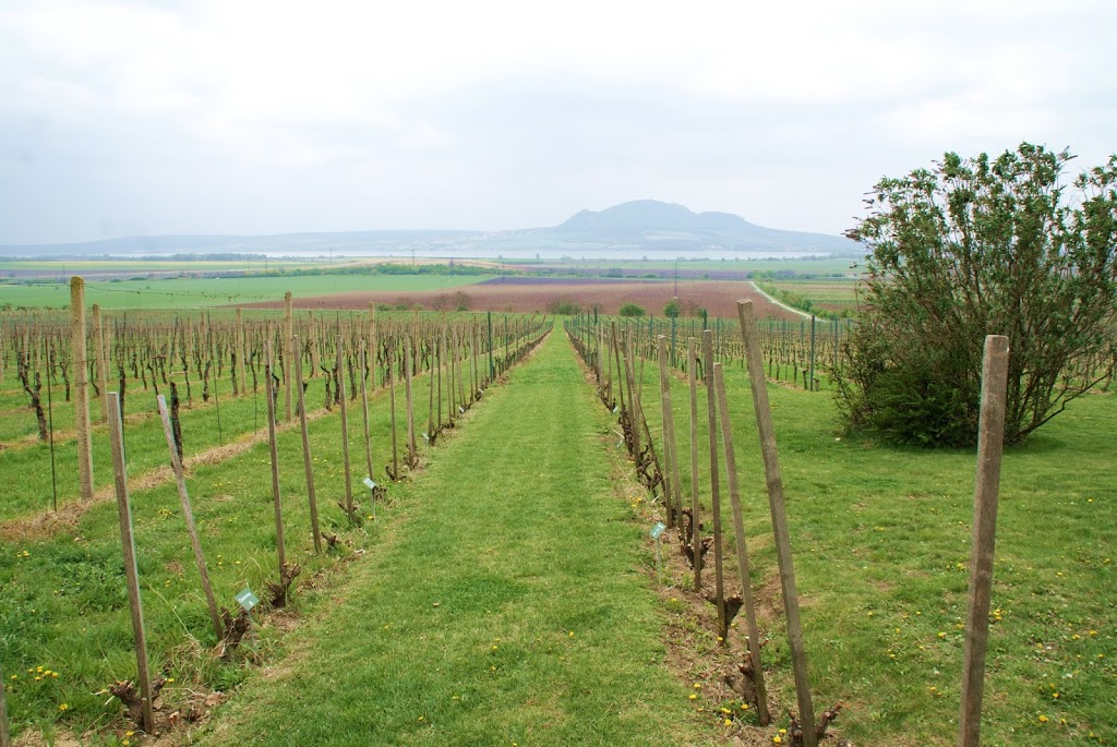 Vin i lange baner i Tsjekkia
